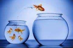 Glücklich springende Fische Stockfotos