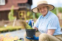 Glückliche ältere Frau, die Blumen in den Töpfen pflanzt lizenzfreie stockfotografie