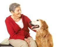 Glückliche ältere Frau mit ihrem golden retriever Stockbilder