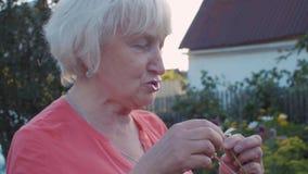 Glückliche ältere Frauenvermutung auf weißer Kamille im Sommergarten an der Landschaft stock video