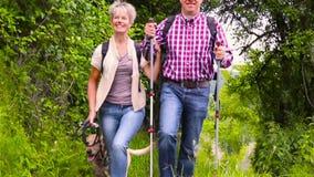 Glückliche ältere Paare, die mit Hund wandern stock video footage