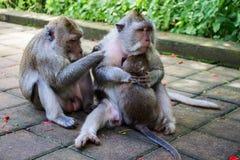 Glückliche Affe-Familie Lizenzfreies Stockfoto