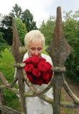 Glückliche Braut atmet den Geruch von roten Rosen hinter dem alten Schlosszaun stockfotografie