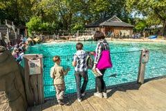 Glückliche Familie, die Humboldt-Pinguine auf den Zoo betrachtet stockfoto
