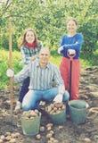 Glückliche Familie, die Kartoffeln erntet Stockbilder