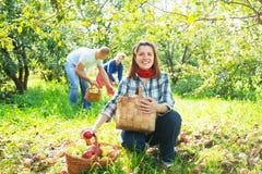 Glückliche Familie erfasst Äpfel stockfotos