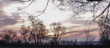 Glückliche feiernde gewinnende Erfolgsfrau bei Sonnenuntergang stockfotos