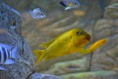 Glückliche Fische Lizenzfreies Stockbild