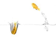 Glückliche Fische stockbild