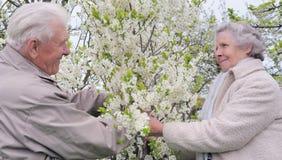 Glückliche Großeltern in blühendem Garten Stockfoto