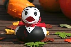 glückliche Halloween-Ente mit Kürbis, Dracula-Ente Lizenzfreies Stockbild