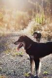 Glückliche Hunde im Sonnenlicht lizenzfreie stockfotografie