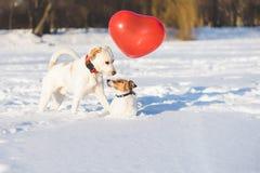 Glückliche Hundepaare mit Herzen formten Luftballon als Valentinsgrußtageskonzept stockfotografie