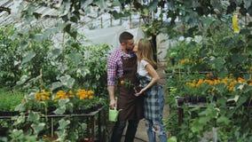 Glückliche junge Floristenfamilie im Schutzblech haben Spaß während des Arbeitens im Gewächshaus Attraktive Mannumarmung und küss stockfoto