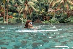 Glückliche junge Frau in einem tropischen Unendlichkeitspool Luxus-Resort auf Bali-Insel lizenzfreies stockfoto