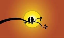 Glückliche junge Wellensittiche auf Baumast während des Sonnenuntergangs u. des orange Himmels Stockbilder