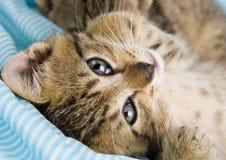 Glückliche Katze stockbilder