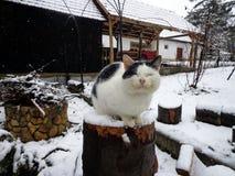 Glückliche Katze Stockfoto
