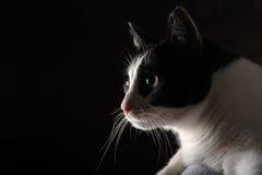 Glückliche Katze auf schwarzem Hintergrund Lizenzfreie Stockfotos