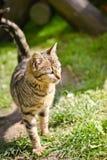 Glückliche Katze in der Sonne Stockfotos