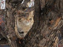 Glückliche Katze, die auf dem Stamm eines wilden аpple-Baums sitzt Lizenzfreies Stockfoto
