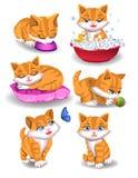 Glückliche Katze, die verschiedene Tätigkeiten tut lizenzfreie abbildung