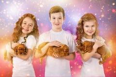 Glückliche Kinder und Hunde auf Weihnachtsabend Neues Jahr 2018 Feiertagskonzept, Weihnachten, Hintergrund des neuen Jahres Stockbilder