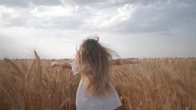 Glückliche Kindheit, Kleinkindmädchen in den weißen Kleiderläufen mit den Armen verbreitet zu den Seiten über Weizenfeld mit den  stock video
