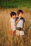 Glückliche kleine Kinder im Gras Lizenzfreie Stockfotografie
