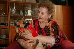 Glückliche, lächelnde Großmutter mit dem Weihnachtsgeschenk, Chihuahuawelpe mit dem roten Band stockfoto