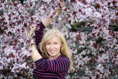 Glückliche lächelnde kaukasische blonde Frau mit nahem blühendem Pflaumenkirschbaum des langen Haares Lizenzfreie Stockfotos