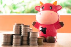 Glückliche rote Kuhbankeinsparung mit den Münzen, die für das Geld speichert c stapeln stockbilder