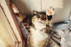Glückliche schöne Katze liegt nahe dem Fenster, Sonnenuntergang, grüne Augen stockfotografie