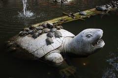 Glückliche Schildkröte Lizenzfreies Stockfoto