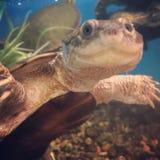 Glückliche Schildkröte Stockfoto