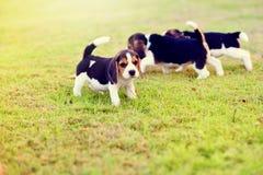 Glückliche Spürhunde Stockfotos