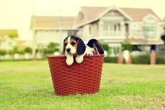 Glückliche Spürhunde Stockbild