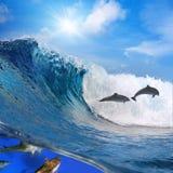 Glückliche spielerische Delphine, die auf brechende Welle springen Stockfoto