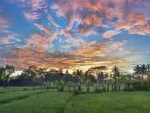 Glückliche Stunden am Pakem-Dorf-Reisfeld Stockfoto