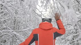 Glückliche Wintertagesfrau, die im Wald weißer schneebedeckter Waldrührende Niederlassung von Bäumen, Schnee fällt von ihnen geht stock video footage