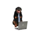 Glücklicher Abdeckunghund Lizenzfreie Stockfotografie
