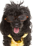 Glücklicher adretter Hund Lizenzfreies Stockfoto