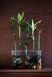 Glücklicher Bambus Stockbild