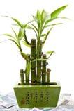 Glücklicher Bambus auf Hintergrund des Geldes. Lizenzfreie Stockfotografie