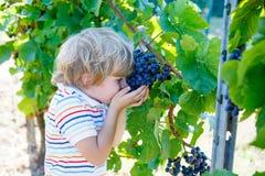 Glücklicher blonder Kinderjunge mit reifen blauen Trauben Stockfoto