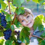 Glücklicher blonder Kinderjunge mit reifen blauen Trauben Stockfotografie