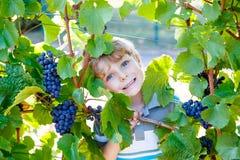 Glücklicher blonder Kinderjunge mit reifen blauen Trauben Lizenzfreies Stockbild