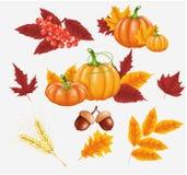 Glücklicher Danksagungsfeierhintergrund Kürbis, Blätter, Rowan Berries, Eicheln Lizenzfreie Stockfotografie