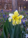 Glücklicher Frühling Stockfoto