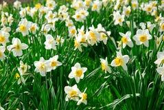 Glücklicher Frühling Stockbild
